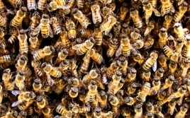 Bee Hive - Photo by Eric Perrone